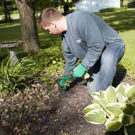 Weeding Service